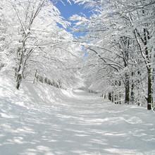 Inverno bella avenue