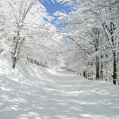 traumhafte winterallee