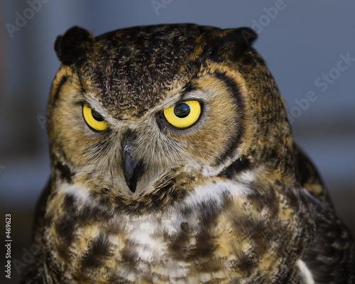 Stare owl