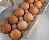 eggs in carton. poster