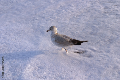 pigeon in foam