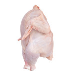 isolated  chicken with clipping path poster