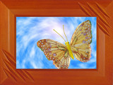 the butterfly in a framework poster