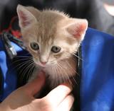 kitten in backpack poster