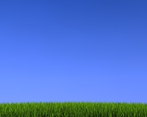 blue sky on grass