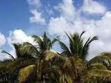 tropical sky poster