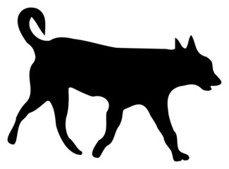 silhouette of a dog