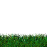 short isolated grass poster