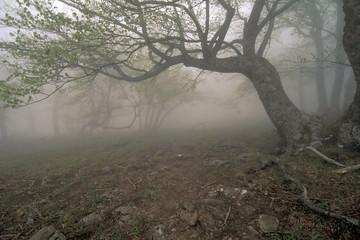 fog's tree