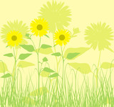 background with sunflowers, poster