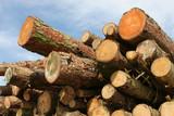 pine logs poster