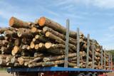 timber trailer poster