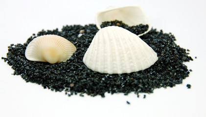 sea shells on black