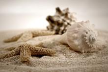 Seashells en la arena