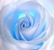 Quadro blue rose