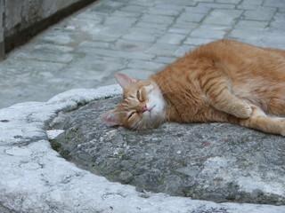 a cat of venice