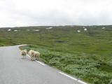 sheep trip poster