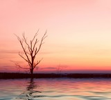 pink sunrise with lonely tree poster