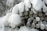 logs under snow poster