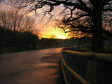 sunset down country lane poster