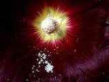 kelch mit stempel und pollen poster