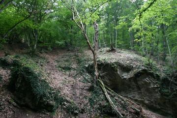 forêt dans le sud de l'ukraine