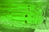 neon green glass poster