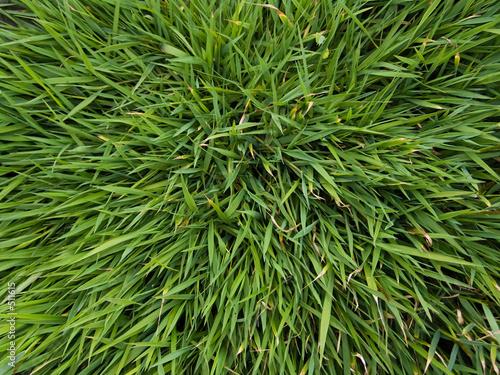 backgrounds - grass