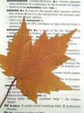 maple leaf on dictionary poster