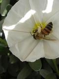upside down honey bee poster