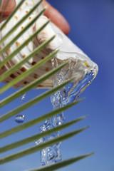 agua tropical