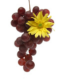 bunch of grapes with a yellow flower poster