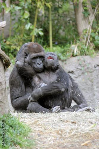 crying baby gorilla