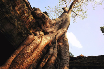 cambodia, ta prohm temple at the sunset