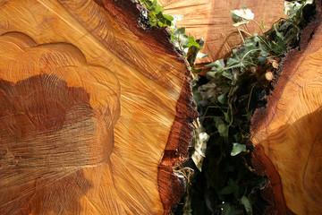 birch wood 2
