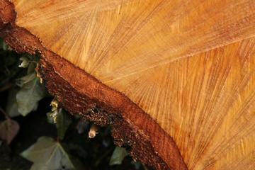 birch wood 4