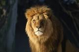 le roi lion poster