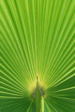 beautiful palm tree leaf texture poster