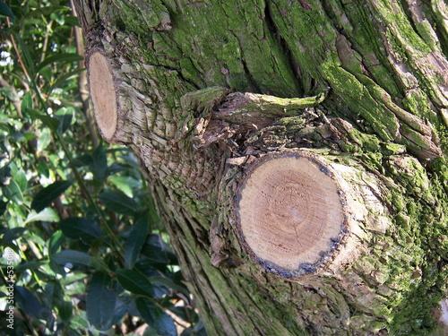 branche coup sur un tronc d 39 arbre photo libre de droits sur la banque d 39 images. Black Bedroom Furniture Sets. Home Design Ideas