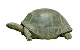 giant turtle with path poster