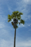 palm tree against blue sky poster