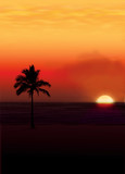 palm against a setting sun.. poster
