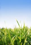 Fototapety grass blue sky