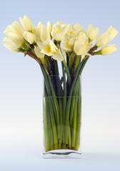 narcissus still life