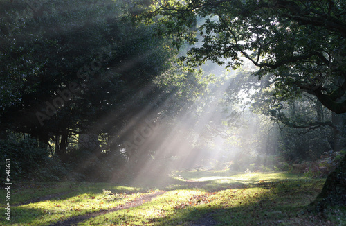 Foto op Canvas Bos in mist forest glade