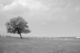 lonely tree in the field in black and white poster