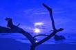 Leinwanddruck Bild - seychelles praslin
