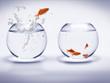 poisson rouge dans un aquarium - 543848