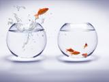Fototapety poisson rouge dans un aquarium