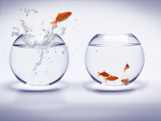poisson rouge dans un akwarium